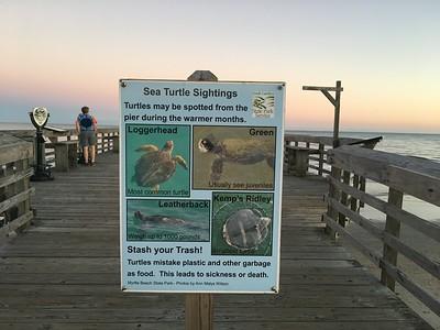 Myrtle Turtles