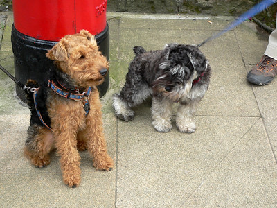 Two canine citizens of Hawes!