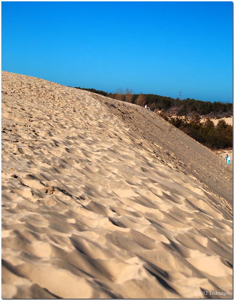 a ridge of a sand dune system at Jockey's ridge
