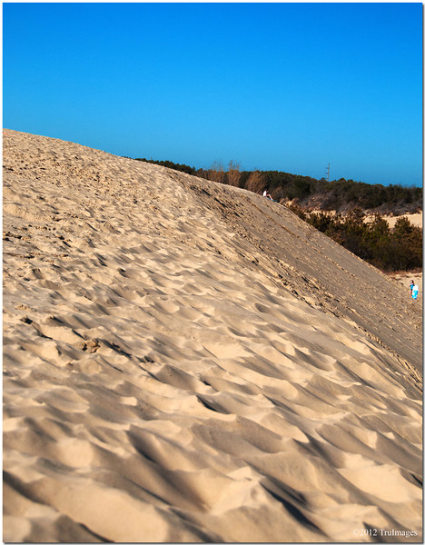 a ridge of a sand dune system at Jockey's ridge