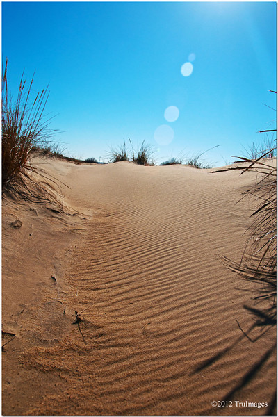 more sand dunes at Jockey's Ridge