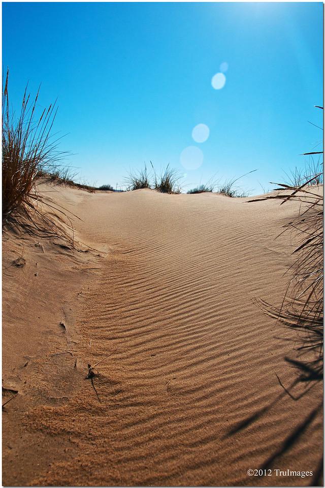 more sand dunes at Jockey's Ridge