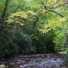 0436 River foliage