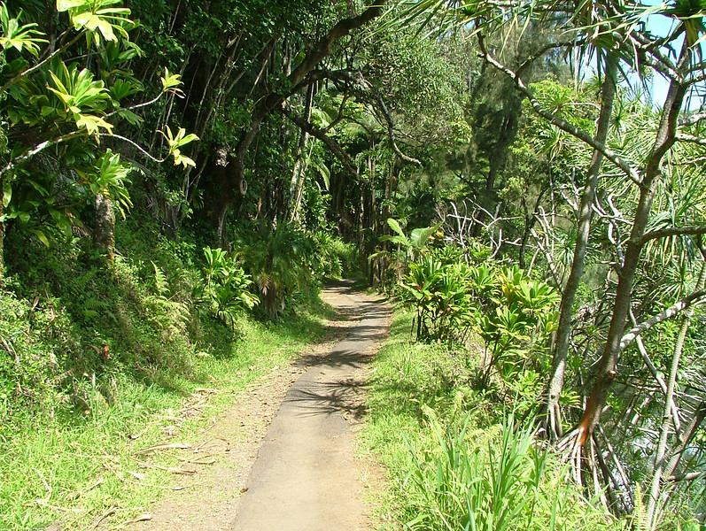 WALKING PATH TO THE BOTANICAL GARDENS, IN HILO HAWAII