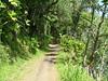 WALKING PATH TO THE BOTANICAL GARDENS, IN HILO HAWAII