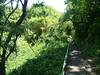 AKAKA FALLS STATE PARK, HILO, HAWAII