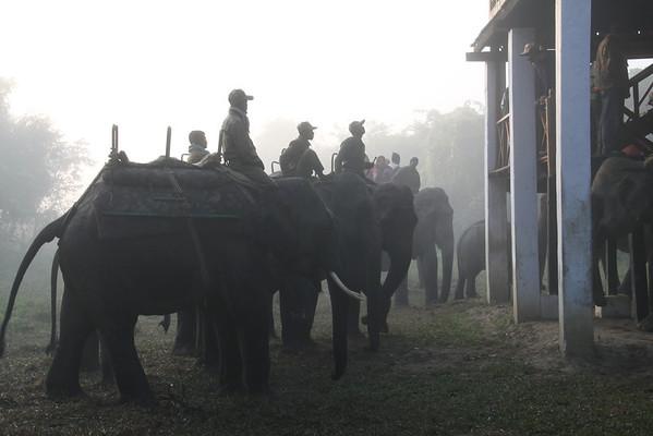 NE India Kaziranga