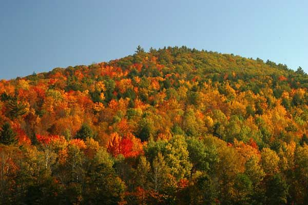 """PEAK"" FOLIAGE-WARREN, NH."