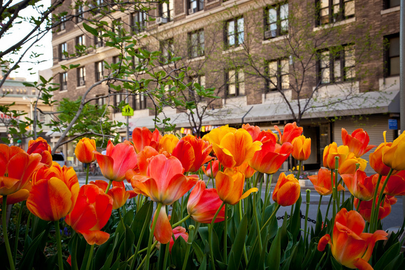 TULIPS ON BROADWAY OUTSIDE HOTEL