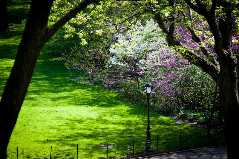 CENTRAL PARK IN BLOOM