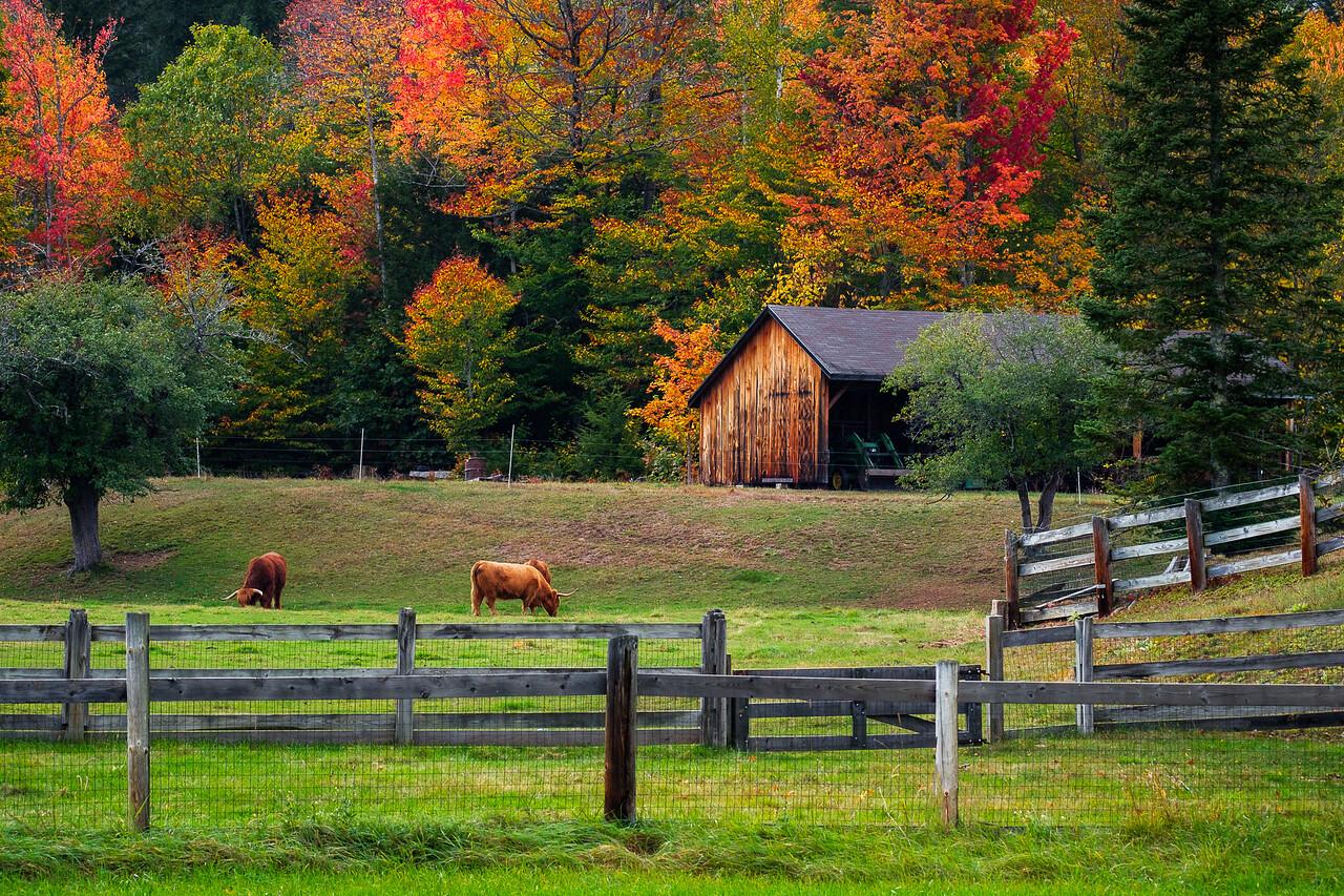 FARM NEAR N. CONWAY, N.H.