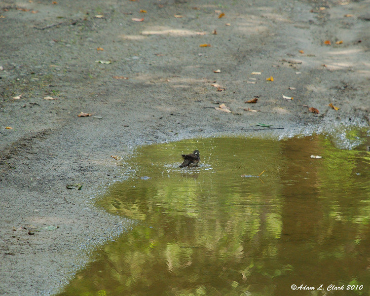 A bird taking a bath at the campground