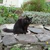 Shermans cat