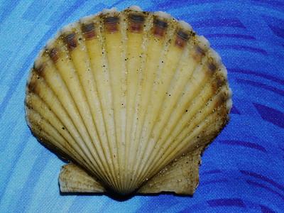 2012-05-11 Shells & Pals