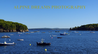 BAR HARBOR BEAUTY