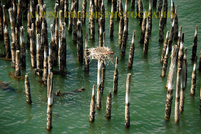 PILINGS OF OLD WITH OSPREY NEST