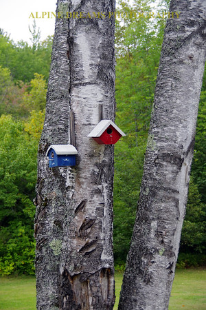 BIRD HOUSES ON BIRCH