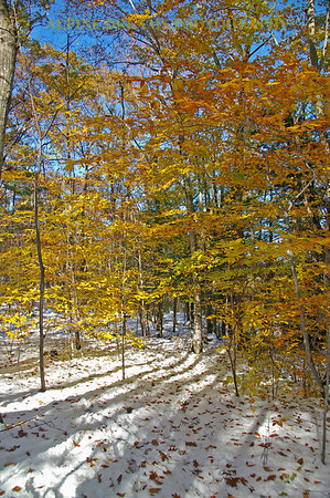 I called this Burst of Fall with Snow!  Between the yellows, browns, blue & white it stands out pretty bright!