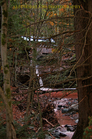 COVERED-BRIDGE-THRU-THE-TREES
