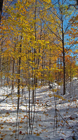 GOLDEN-LEAVES-SNOW