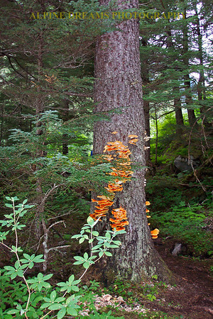 ORANGE-MUSHROOMS