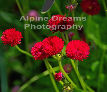 BC FLOWERS RED 2