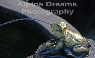 BC FROG FOUNTAIN