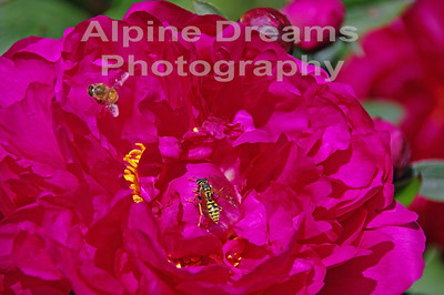 BC FLOWERS RED AND BEES 1
