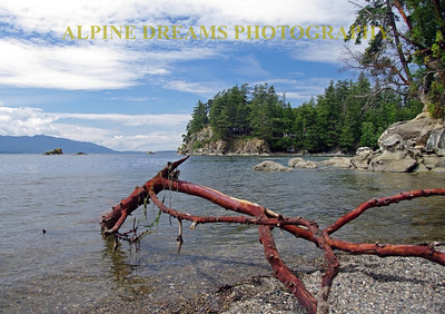 This red skinned tree branch stands out on the rocky beach along chuckanut drive. San Juans in the background. The colors are not touched , the wood is really that red.
