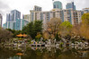 Chinese Garden of Friendship in amongst the buildings of Darling Harbour
