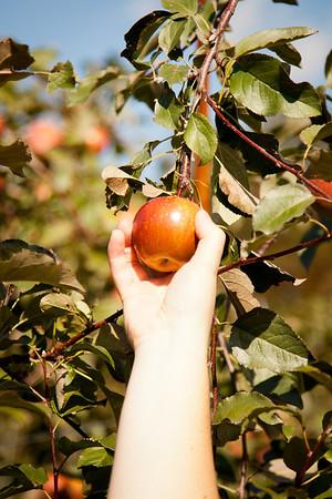 NY Fall Apple Picking