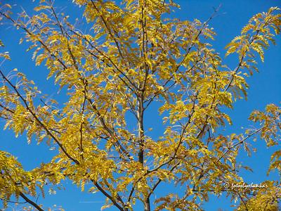 NY Fall Colors 2010