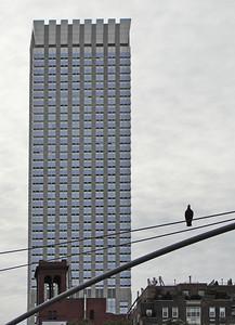 building pigeon 4334