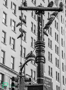 Stop light near Central Park Canon 5D Mark III, 24-105mm F4.0L