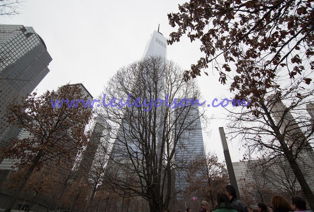 Survivor Tree.  Looking north.  <br /> Nikon D750 and Tokina 11-17mm lens.