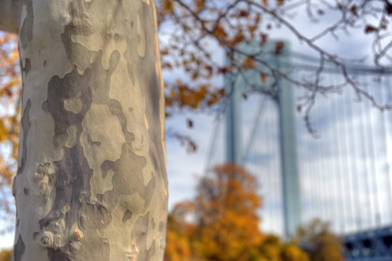 Autumn at Fort Wadsworth, Staten Island