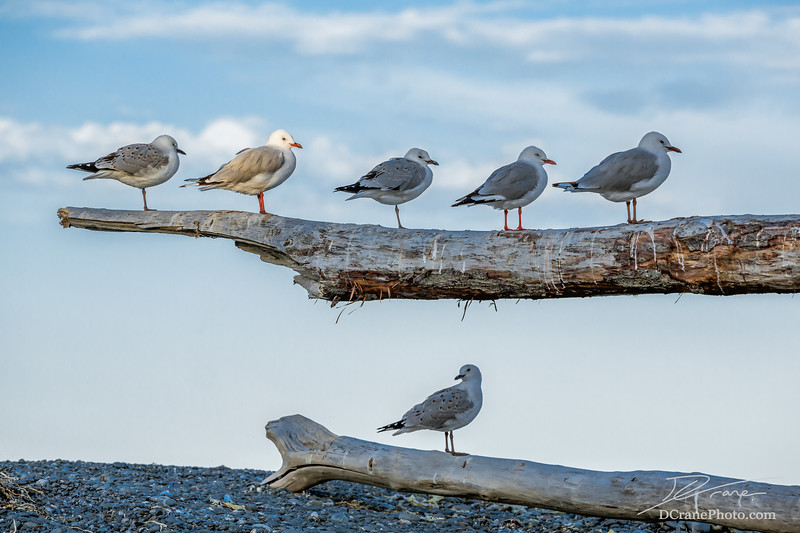 One seagull highlighted among five friends
