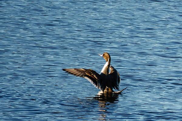 180127 Pea Island National Wildlife Refuge 06