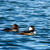 180127 Pea Island National Wildlife Refuge 42