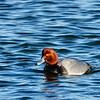 180127 Pea Island National Wildlife Refuge 29