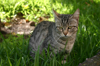 Kass koduõuel