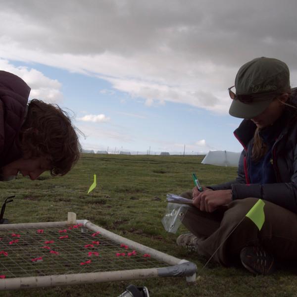 more pre-grazing measurements.  photo by tenzin.