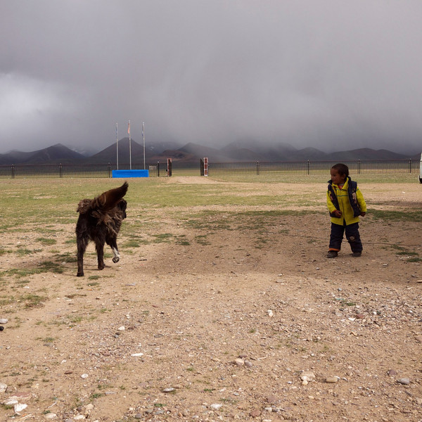 zoom lion and tsering