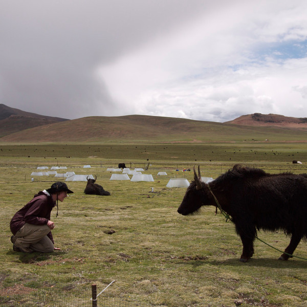 me getting to know the yak. photo by kelly.
