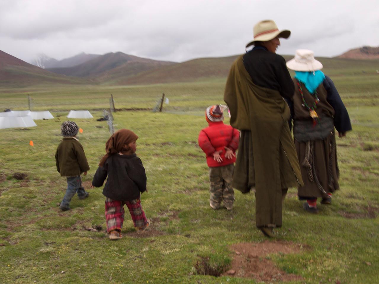 the herding family