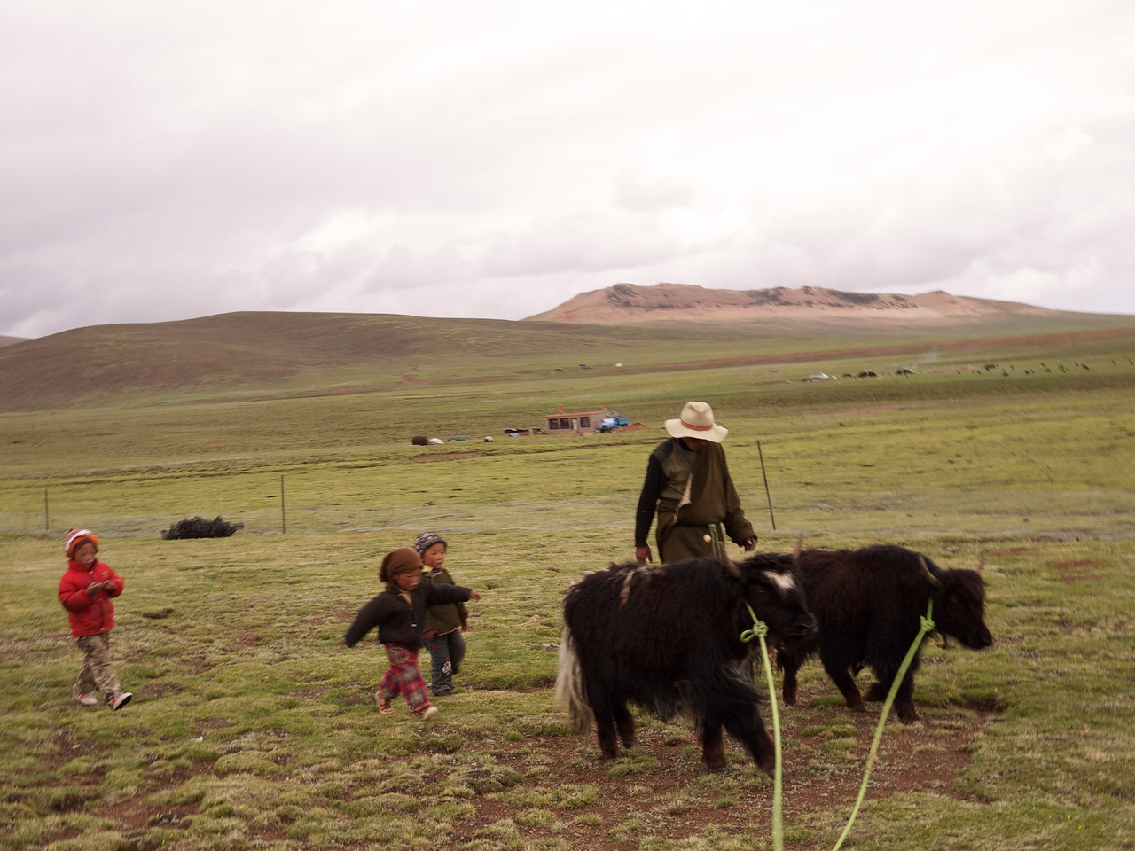 this is a picture i took of me wrangling the yaks, only i'm not in it .  it's easiest to wrangle when other people shoo the yaks from behind.