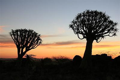 Kokerbomenbos. Keetmanshoop, Namibië.