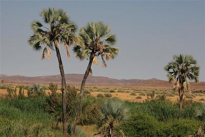 Palmwag. Damaraland, Namibië.