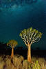 """This picture was taken at night, in complete darkness. The trees were """"light-painted"""" with flashlights."""