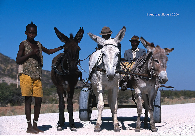 Donkey kart on the road in Namibia